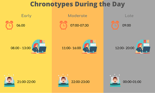 chronotype-daily-schedule